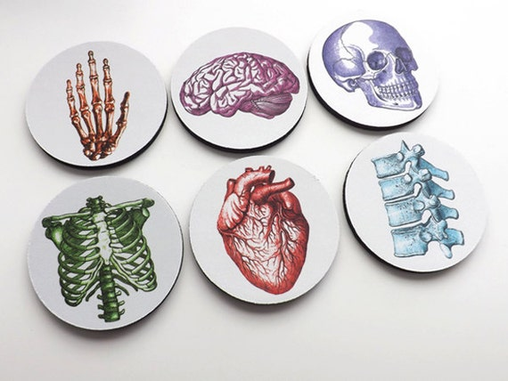 Nursing School Graduation Medical coworker gift Coasters anatomy student physician assistant nurse practitioner for him biology cardiology