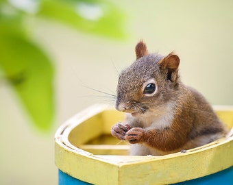 Squirrel in a Boat Photo - Fine Art Photography - Sail Away - Wall Art - Animal - Relax - Nature