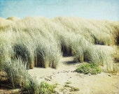 "Beach photography - sand dunes  - pale aqua green - coastal wall art - sea grass - california beach print - 8x10  11x14  ""Grass Dunes"""
