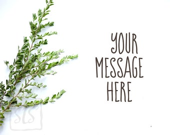 Texas Sage branches leaves Mockup Styled Stock Photography Background Desktop Wallpaper #213