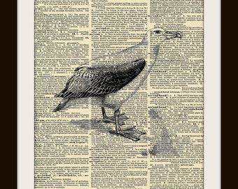 Art Print ALBATROSS 8x10 Dictionary Gold Gilded Vintage Page