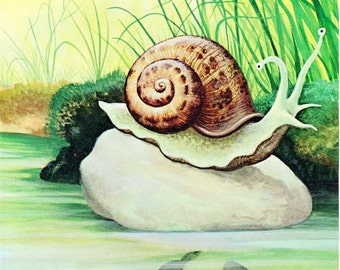 Vintage 1960's Child's PIcture Book Animal Bookplate Illustration, Print for Framing, Snail on a Pond Rock
