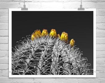 Barrel Cactus, Tucson Arizona, Black and White, Cactus Picture, Cacti, Nature Photography, Sonoran Desert, Orange, Flower Picture