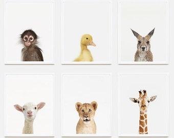 Baby Animal Nursery Art Prints. Giraffe Little Darling. Safari Animal Prints. Animal Wall Art. Animal Nursery Decor. Baby Animal Photos.