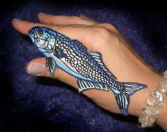 Bluefish Blue Fish Tailor Shad  elf Fish Pomatomus saltatrix Iron on Patch