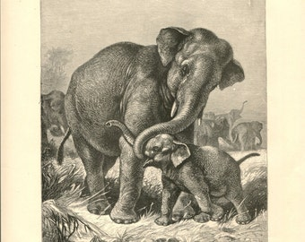 Antique Victorian Engraving Print of Asiatic Elephants 1880s