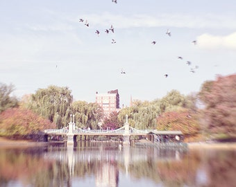 Boston Photography, Birds, New England, Autumn, Landscape, Boston Public Garden, Dreamy, Whimsical, Sky, Nature Photography, Fine Art Print