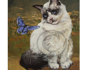 Ragdoll Cat and Butterfly - original acrylic painting - hand painted - 8x10