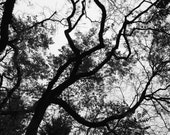 Nature photo print bare tree branches, home decor wall art, bedroom living room art photograph Ontario dramatic tree cottage canvas moody