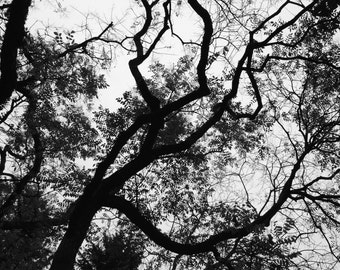 Nature photo print bare tree branches, home decor wall art, bedroom living room art photograph Ontario dramatic tree cottage moody spooky