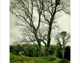 8 x 10 Kentucky Country Road and Stormy Trees photo print
