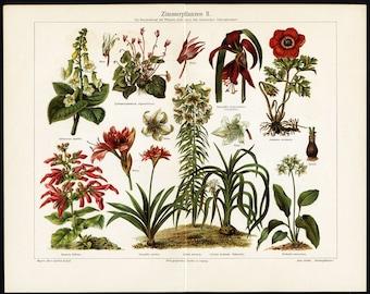 1894 HOUSE PLANT LITHOGRAPH - plants & flowers original antique botanical flora print no 1