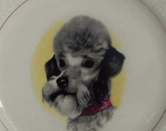 Poodle Dog plate/Poodle face on plate/Vintage decorator  plate/Lord Nelson Pottery/dog face on plate