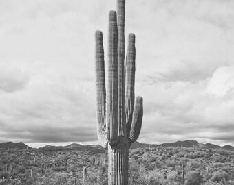 Desert Cactus Photograph, Saguaro Cactus in Black and White