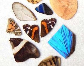 Real Butterfly Wings - Natural authentic butterfly and moth wings - set3