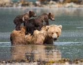 Cute MOM and BABY BEARS Photo Print, Baby Animal Photography, Wildlife Photograph, Nursery Art, Mother and Baby Animals, kids room, Grizzly