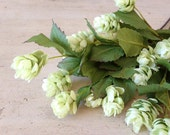 Hops, silk flowers, beer hops, artificial plant, artificial flower, faux hops, floral stem, fake flower, boutonniere, floral, floral supply