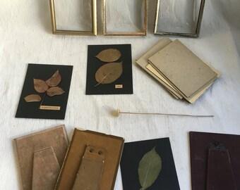 Vintage convex glass metal frame pressed leaves  desk frames  pressed flowers
