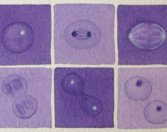 Mini Purple Mitosis  - original watercolor - cell cycle
