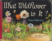 What Wildflower is It? by Anna Pistorius Vintage Book, C1950