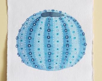 Sea urchin shell original watercolour study illustration painting beach ocean sea set