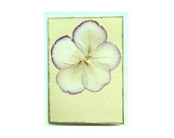 Rose petal Collage Card - Blank 5x7 (RP57-003)