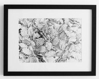 Nature Photography / Autumn / Still Life / Black & White Print