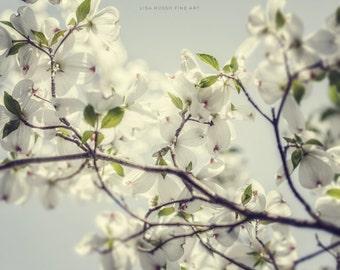 White Flower Print or Canvas Art, Dogwood Blossoms, Nature Photography, White, Pale Blue, Mint Green, Feminine Girly Flowers, Botanical.