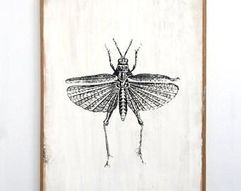 Grasshopper Art Black and White Framed Butterfly Decor Silkscreen on Wood