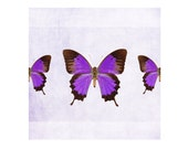 Purple Butterfly artwork, butterfly photography, butterflies art print wall art, kids decor, nursery decor, bathroom decor fine art print