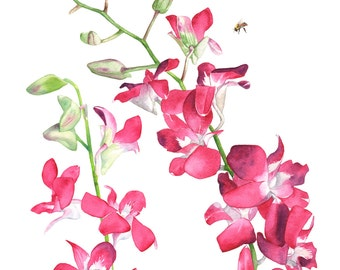Singapore Orchids print of watercolor painting. SO11096. A3 size print, Singapore orchids watercolor, botanical wall art, tropical print