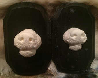Snout Death Casts or Death Masks Taxidermy Oddities Curio Reference Study