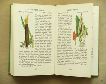 British Wild Flower book pocket guide The Observer's Book of Wild Flowers