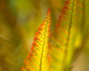 Fern photography, Green wall art, Forest fern photo, Nature photography, Nursery décor, Fairy garden, Whimsical art, Zen art print