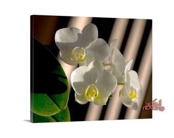 Orchid Art, Flower Photography, Floral Print, Canvas Art, Giclee Canvas Print, 11 x 14, 16 x 20, MurrayBolesta