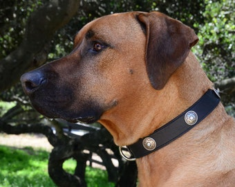 "Black Leather Dog Collar, Silver Tooled Conchos, Custom Leather Dog Collar. Large size 18 - 20"" inches"