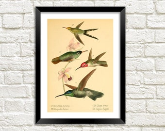 BIRDS ART PRINT: Vintage Bird Illustration Wall Hanging (A4 / A3)