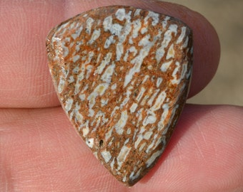 Dinosaur bone Guitar Pick - Prehistoric Fossil Plectrum D-16-35