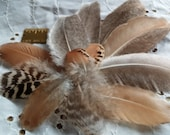 Peacock Flat Feathers,12 Feathers,Including One Small Pair, Natural, No Dye or Toxins, Art Supply, AlterSupply, Jewlery Making, Scrapbooking