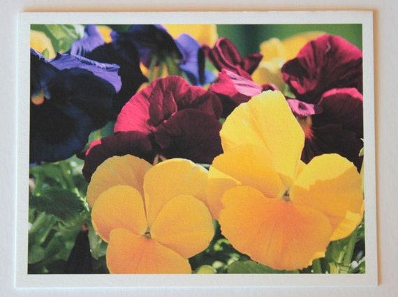 Primary Colors, flowers, note card, blank greeting card, flower photo, red, yellow, blue, single card, photo greeting card, garden, nature