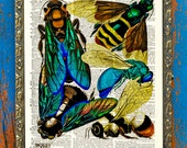 Intricate E.A. Séguy Bee Wings Insect Print on Antique Upcycled Bookpaper Unframed
