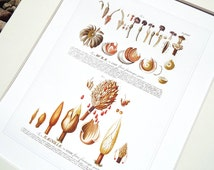 Magnolia Flower Seed Chart Botanical Illustration Archival Print on Watercolor Paper
