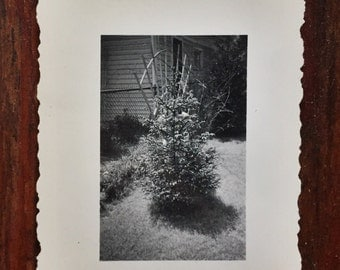 Original Antique Photograph The Festive Tree