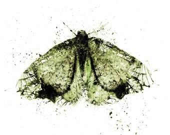 Moth Art Print Green Wall Decor Abstract Wall Art Home Gift Spring Summer