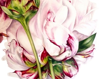 Peony and Bud Greetings card, botanical watercolour, peony watercolour