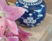 Vintage  porcelain  Ginger Jar  Hawthorn and Prunus with plum Blossom pattern against a background of crackled ice.