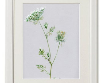 Queen Anne's Lace, original illustration, Daucus carota, botanical art, grey paper, kitchen decor, bathroom decor, bedroom decor