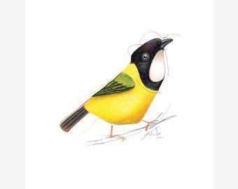 Mangrove Golden Whistler Bird Print A5