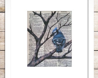 Blue jay, colored pencil, dictionary art print.
