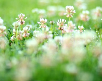 Close Up Clover Field - Flower Photography Photo Print - Size 8x10, 5x7, or 4x6